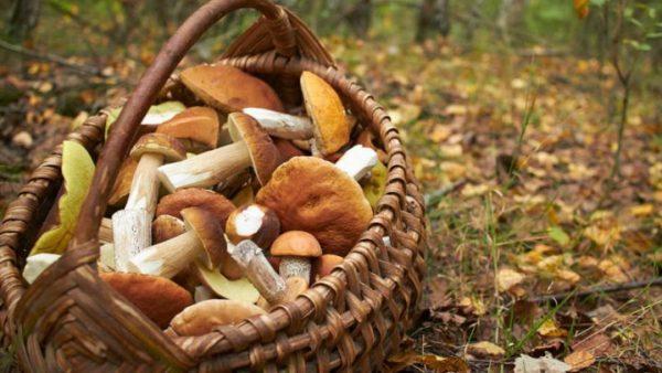 Recomandări de prevenire a intoxicațiilor cu ciuperci